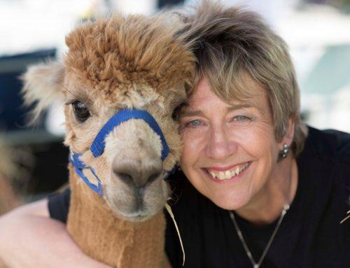 Unsere charmante Richterin der Alpakashow Alsfeld 2019, Liz Barlow aus England